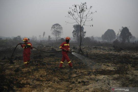 Kebakaran hutan-lahan membayangi Riau pada masa pancaroba
