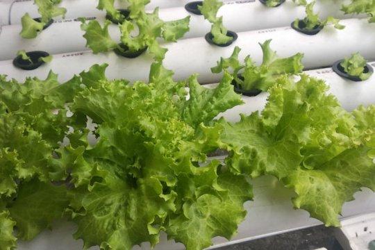 Wagub Lampung dorong masyarakat kembangkan konsep pertanian perkotaan