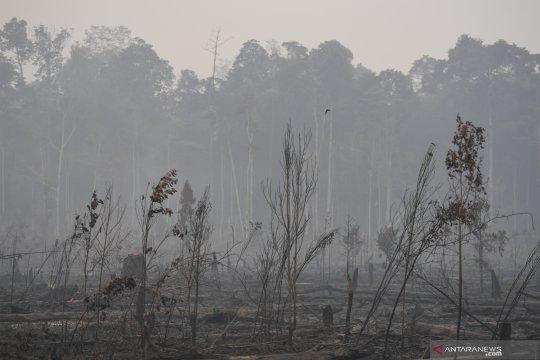 BPBD Bantul : Pemadaman kebakaran lahan hutan dilakukan secara manual