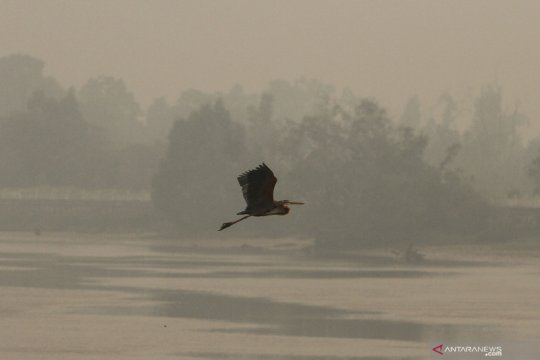 Kabut asap semakin pekat di Pekanbaru