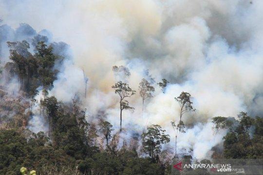 BPBD Sumsel akui masih kesulitan padamkan kebakaran lahan gambut