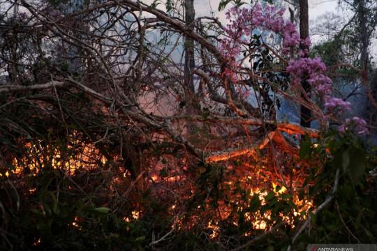 Kebakaran hutan Bolivia rusak ribuan hektar lahan