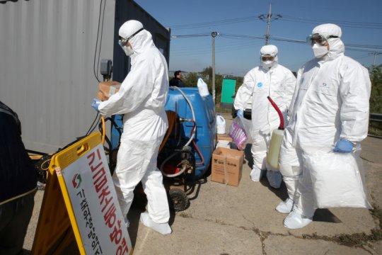 Jerman temukan tiga kasus baru demam babi Afrika
