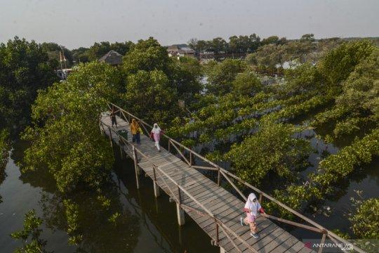 Pertamina gunakan inovasi waring lindungi mangrove dari minyak