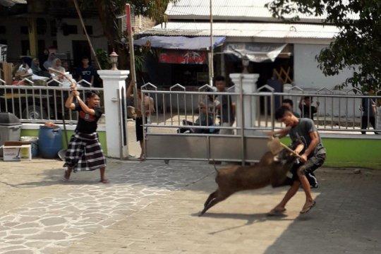 Babi hutan masuk area masjid saat ada acara santunan anak yatim
