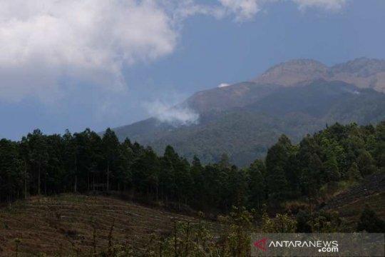 5,5 hektare lahan hutan lereng Gunung Sumbing terbakar