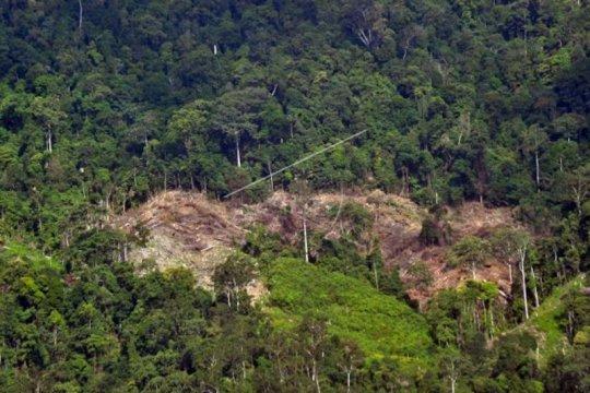 Deforestasi berperan dalam peningkatan zoonosis