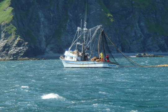 KKP-LSM kerja sama dukung penambahan peninjau kapal ikan