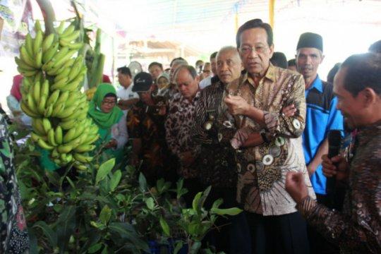 Sultan katakan petani organik harus bangun jaringan pemasaran