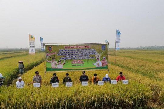 Padi sehat lahan rawa hasilkan produktivitas 8 ton