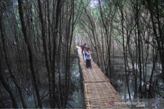 Mangrove Karangsong, penahan abrasi sekaligus wahana edukasi
