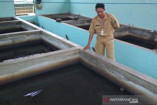 Balai Benih Ikan Kudus sulit produksi akibat kemarau panjang