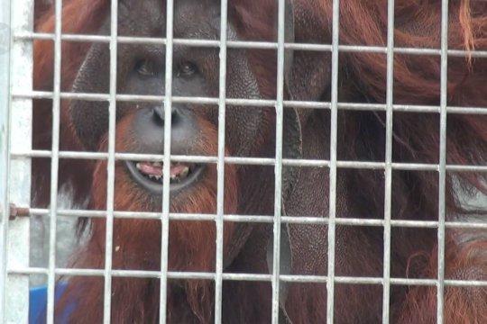 BNPB prioritaskan tangani karhutla kawasan konservasi Orangutan