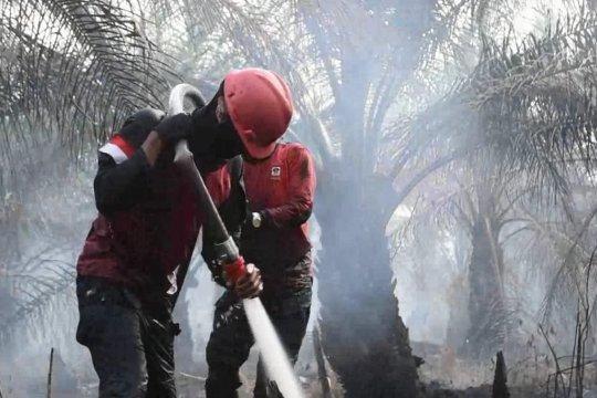 Optimalisasi 6.000 personel untuk atasi karhutla Riau