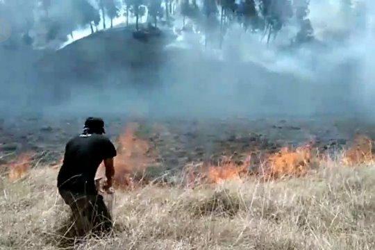 Kebakaran Semeru ancam kehidupan satwa liar