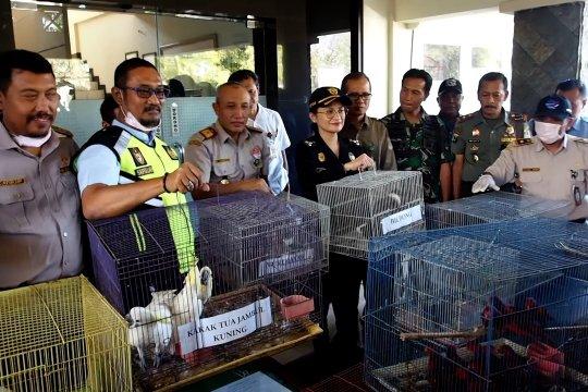 BBKP Surabaya gagalkan penyelundupan puluhan burung langka