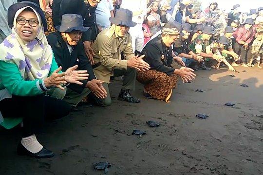 Puluhan tukik lekang dilepasliarkan di Pantai Sodong