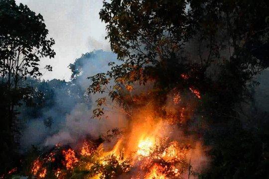 Sepuluh perusahan di Riau disegel KLHK terkait karhutla