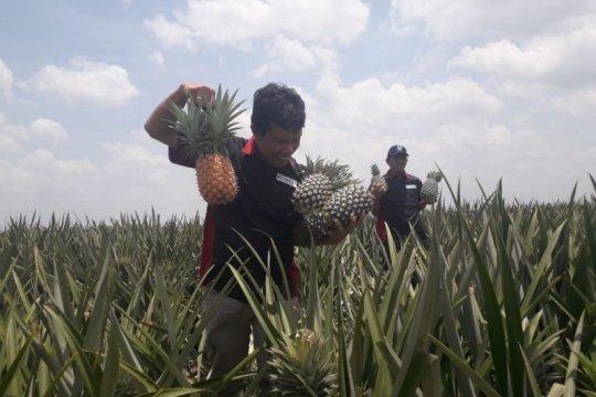 PT GGP ekspor buah segar ke 60 negara dunia