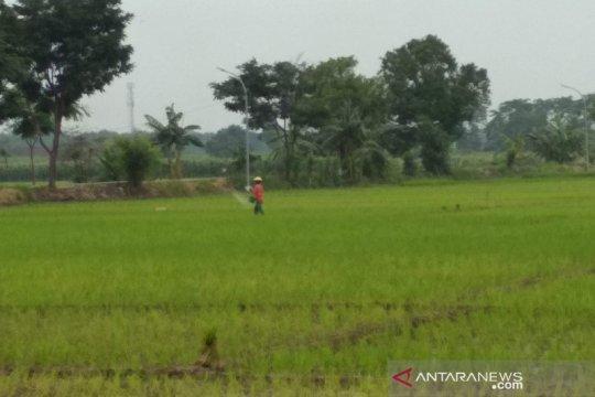 Menunggu kepastian tambahan alokasi pupuk bersubsidi bagi petani