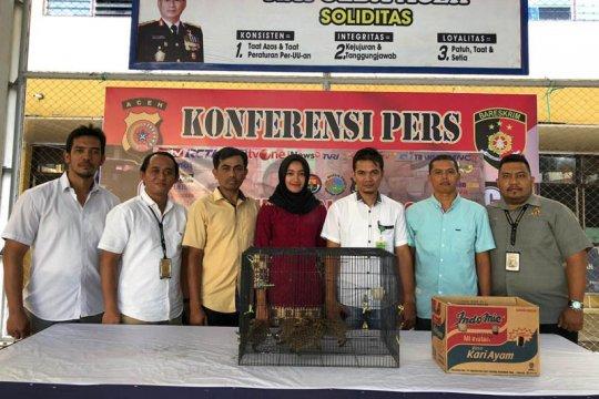 Polresta Banda Aceh tangkap penjual satwa dilindungi