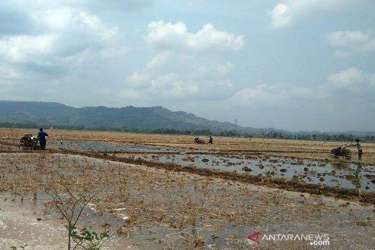 Tak perlu tunggu hujan, petani Banyumas diminta bersiap tanam padi