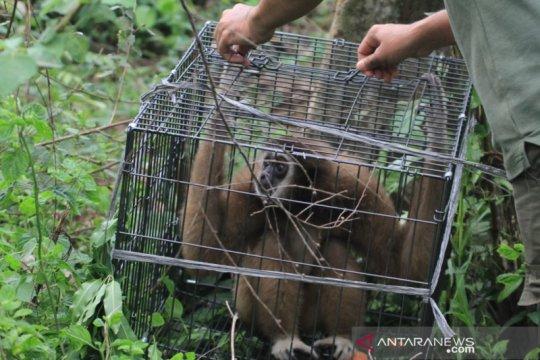 BKSDA Aceh lepasliarkan empat satwa dilindungi