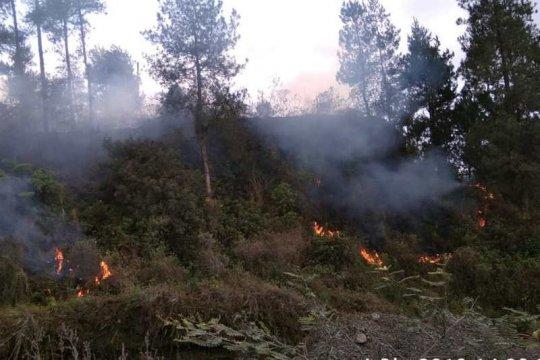 Hutan Gunung Merapi terbakar