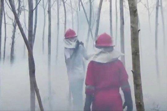 Kebakaran lahan di Sampit hanguskan kebun sengon