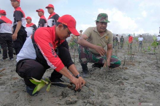 Kodam IX/Udayana tanam 5.000 mangrove