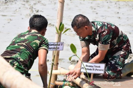 TNI-Pemprov Lampung tanam 5.000 pohon mangrove