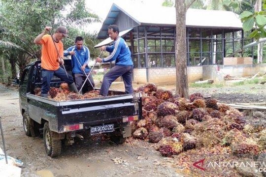 Kehati minta pemerintah intensifikasi sawit tanpa buka hutan