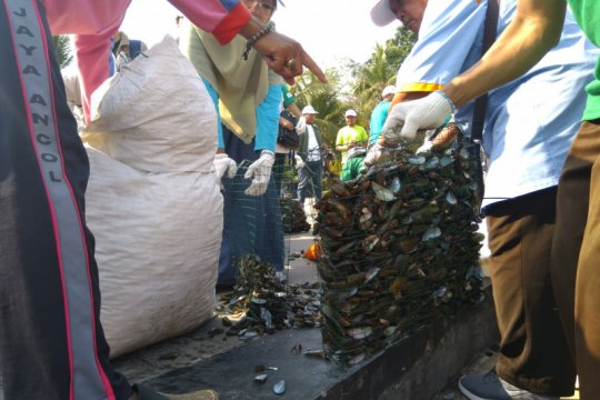 Peneliti tidak anjurkan anak konsumsi kerang hijau dari Teluk Jakarta