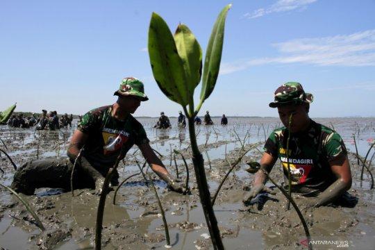 Tanam mangrove massal di Makassar