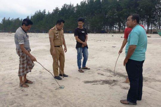 Ratusan ubur-ubur terdampar di Pantai Tiku Agam, 10 orang tersengat