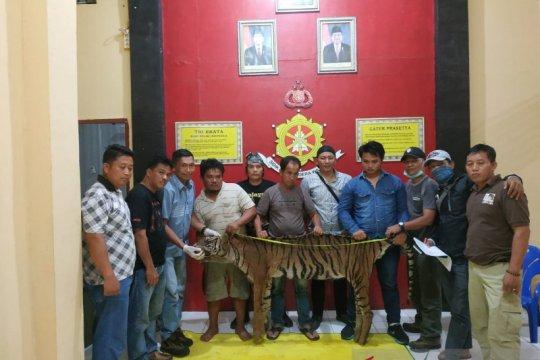 Tim gabungan tangkap tiga pemburu harimau di Bengkulu