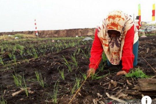 Karhutla Dumai dan Siak berkurang signifikan karena restorasi