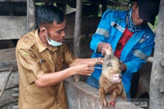 Puluhan ternak babi mati mendadak di Tapanuli Utara