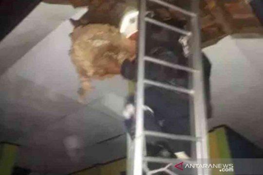 Tawon ndas di Bekasi sengat tiga orang selama sepekan