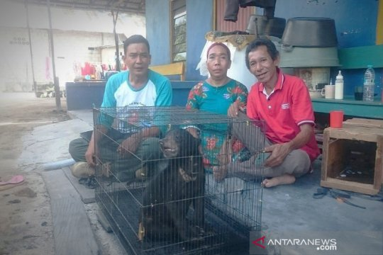 Anak beruang madu diserahkan warga ke BKSDA Sampit