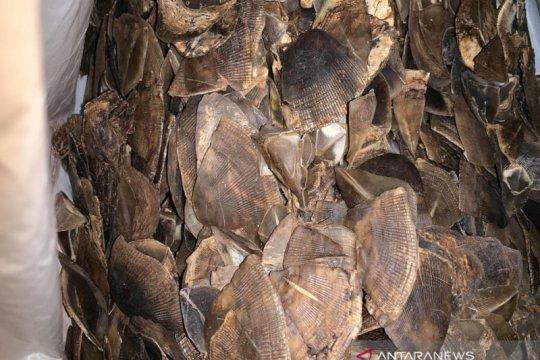 Vietnam sita dua ton gading dan sisik trenggiling