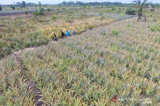 KLHK targetkan restorasi gambut 2 juta ha 2030 sukses 90 persen