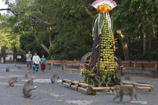 Tiket masuk Alas Kedaton Bali digratiskan hingga September