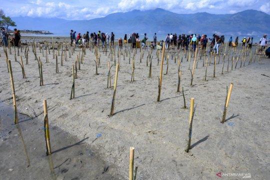 5000 Mangrove untuk Teluk Palu