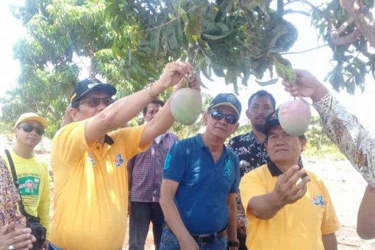 Diharapkan jadi favorit, Agro Wisata Situ Bolang Indramayu diresmikan