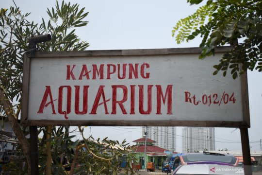 Kampung Akuarium, pemukiman di bekas laboratorium Teluk Jakarta