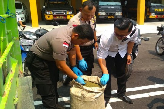 Polisi Palangka Raya sita 12 ton daun kratom