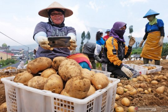 Golden Agrihorti inovasi kentang Balitbangtan untuk industri pangan