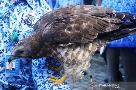 Penyelundupan burung dari NTB marak, BKSDA tingkatkan pengawasan
