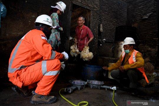Jaringan gas bumi PGN untuk UMKM ayam potong